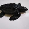 baby tartaruga